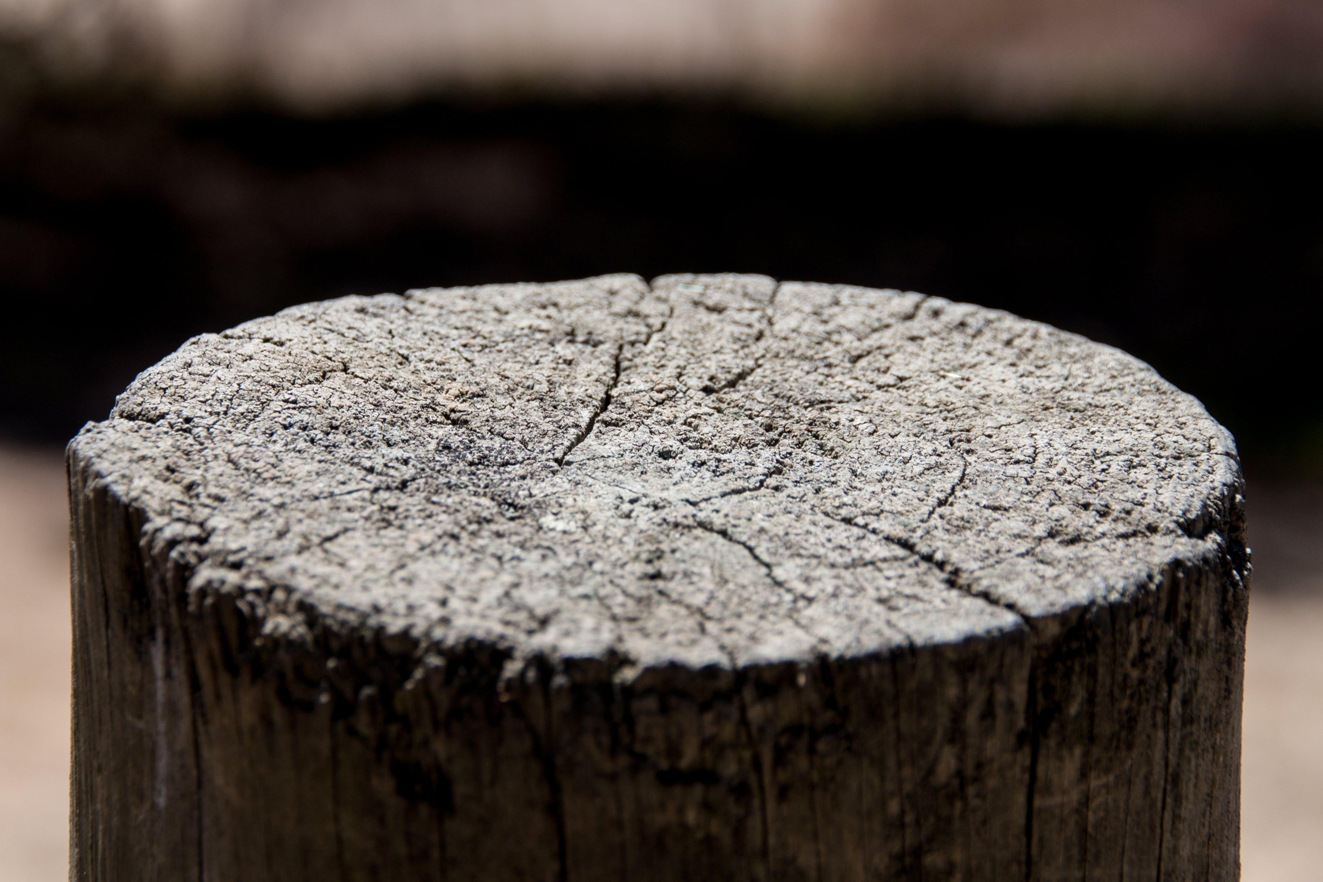 Free stock photo of close, Madeira, wood, wood cut