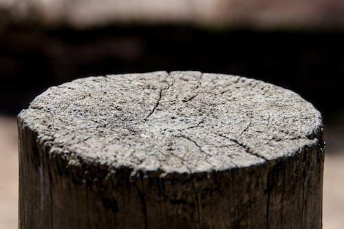 原本, 木材切割, 近距拍攝, 马德拉 的 免费素材照片