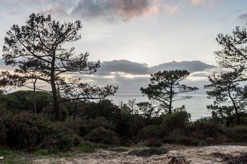 Ilmainen kuvapankkikuva tunnisteilla auringonlasku, luonto, männyt, meri