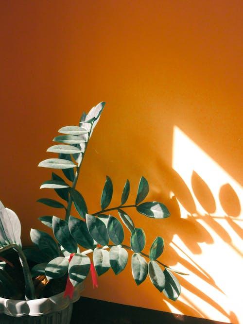 Gratis arkivbilde med anlegg, appelsin, lett, sollys