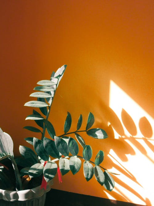 Foto profissional grátis de folhas, fundos laranja, laranja, leve