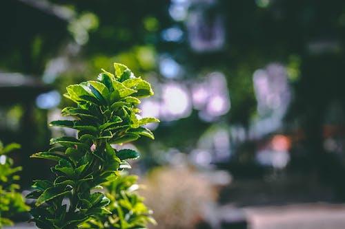 공원, 녹색, 무성한, 성장의 무료 스톡 사진