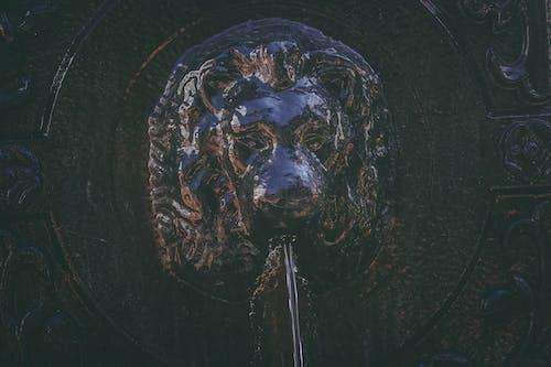 aslan, Çeşme, karanlık, Kaya içeren Ücretsiz stok fotoğraf
