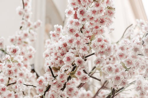 Free stock photo of beautiful, blooming, branch