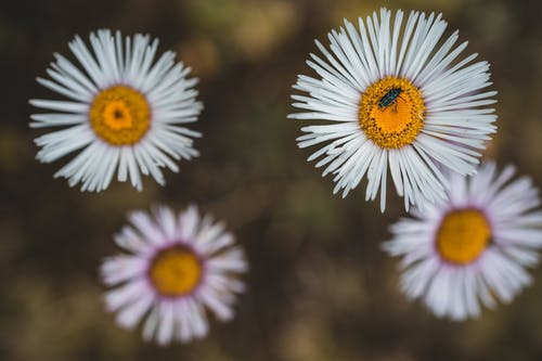 Free stock photo of blooms