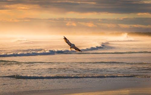 Bird Flying Over Rolling Ocean Waves