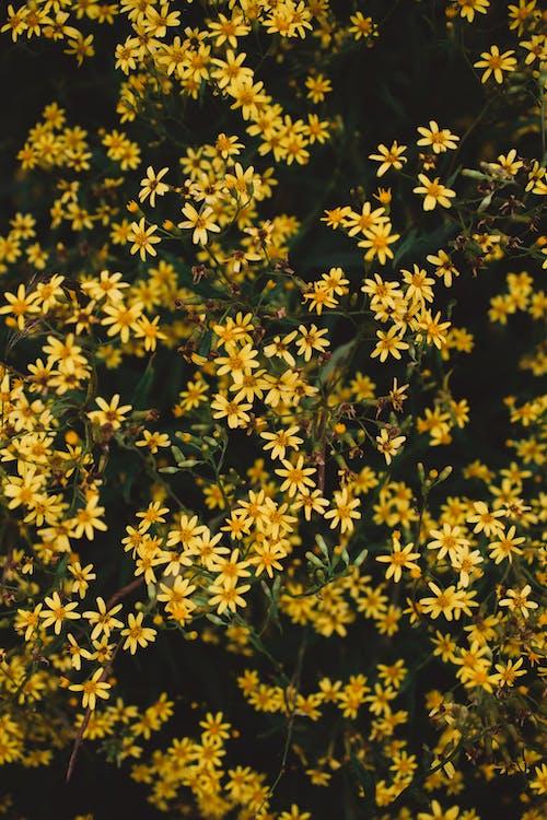 Wild Yellow Flowers in Bloom