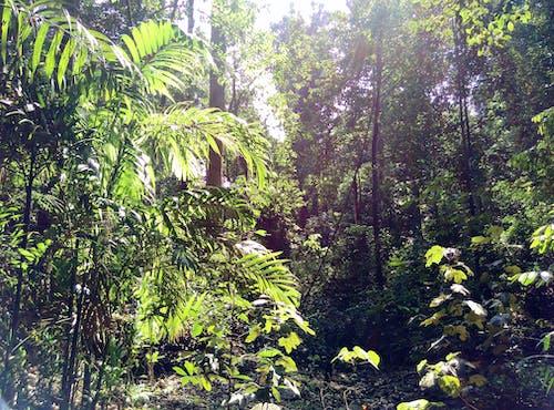 Kostnadsfri bild av skog