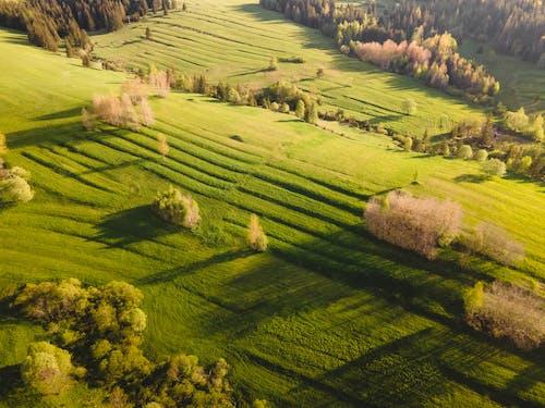 Immagine gratuita di agricoltura, albero, azienda agricola