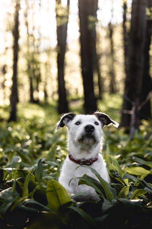 Immagine gratuita di albero, animale, animale domestico