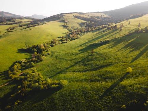 Immagine gratuita di agricoltura, albero, campagna