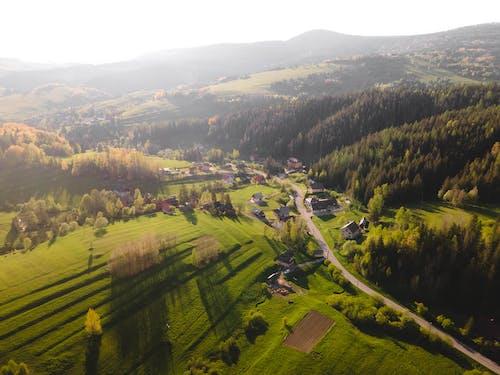 Immagine gratuita di agricoltura, alba, albero