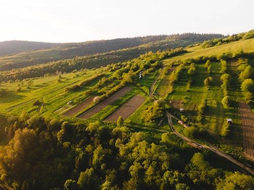 Immagine gratuita di agricoltura, azienda agricola, azienda vinicola