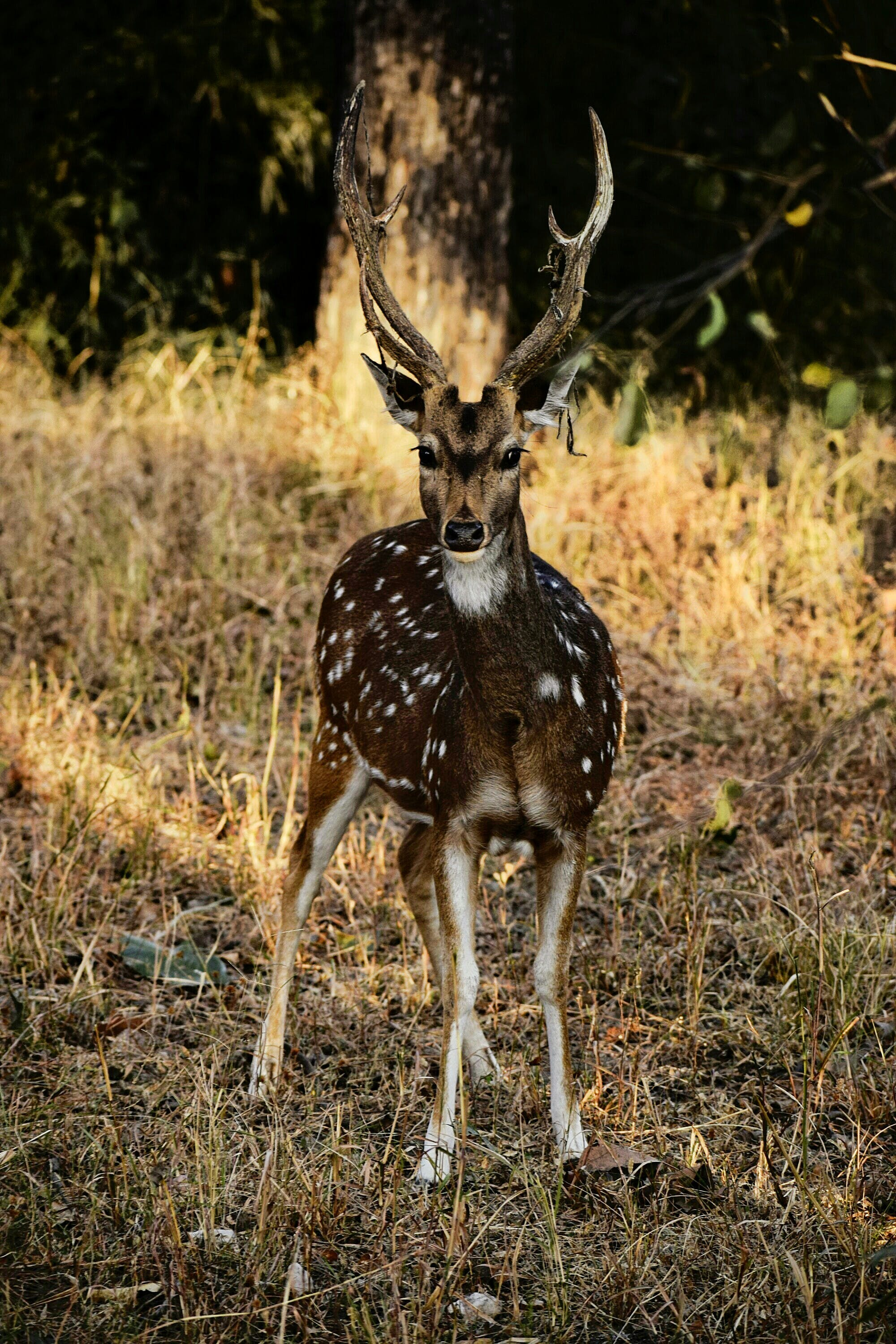 Photography of Deer on Grass
