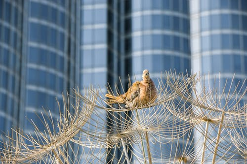 Free stock photo of bird nest, birds of paradise, burj khalifa, bush