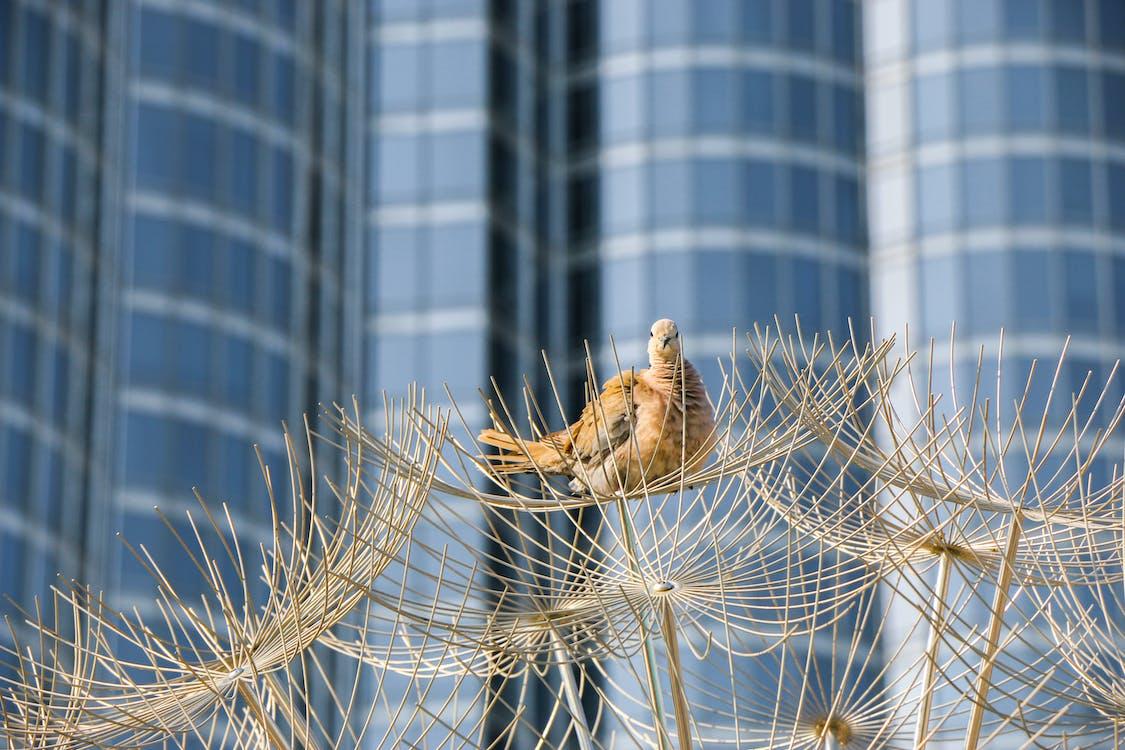 bird nest, birds of paradise, burj khalifa