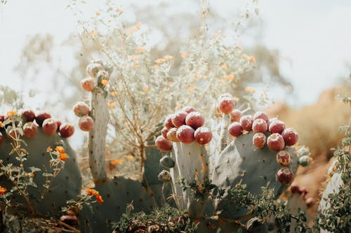 Бесплатное стоковое фото с заводская фотография, заводы, кактус