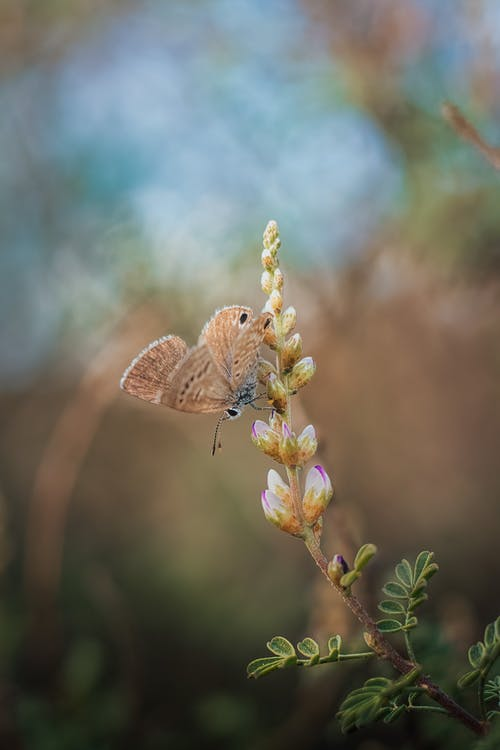 A Butterfly Perched on Flower Buds