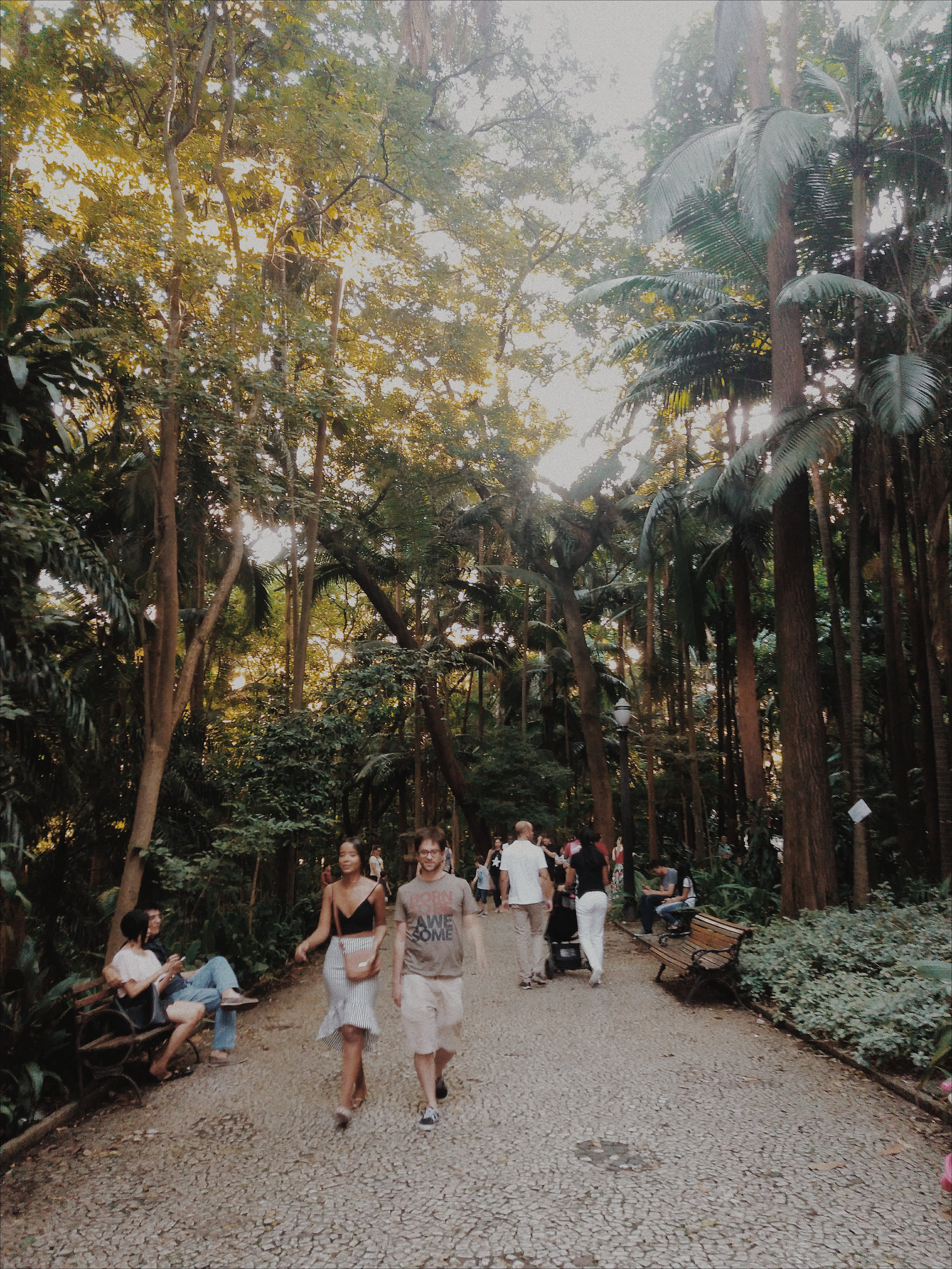 People Walking in a Park With Large Trees