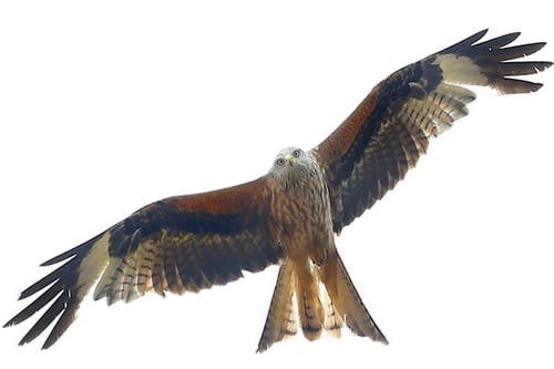 Free stock photo of animals, bird watching, birds of prey