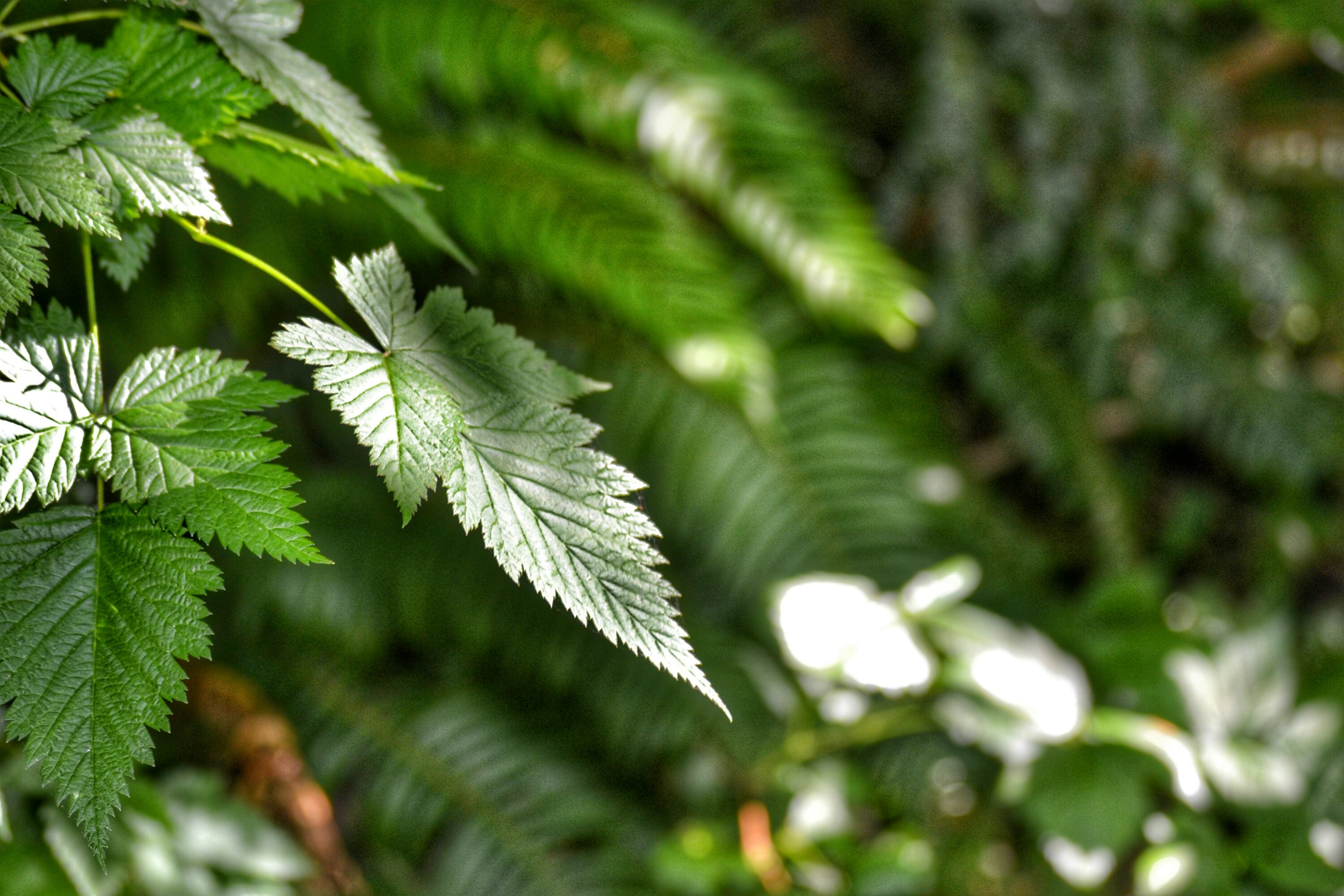 Free stock photo of ferns, green, leaves, night