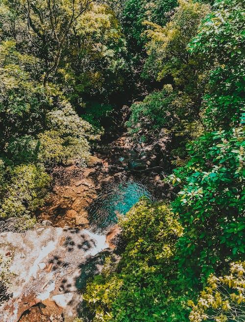 Foto profissional grátis de água, árvores, azul, calmo