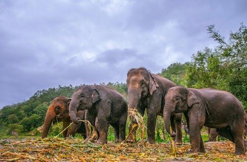 一群動物, 公園, 動物 的 免費圖庫相片