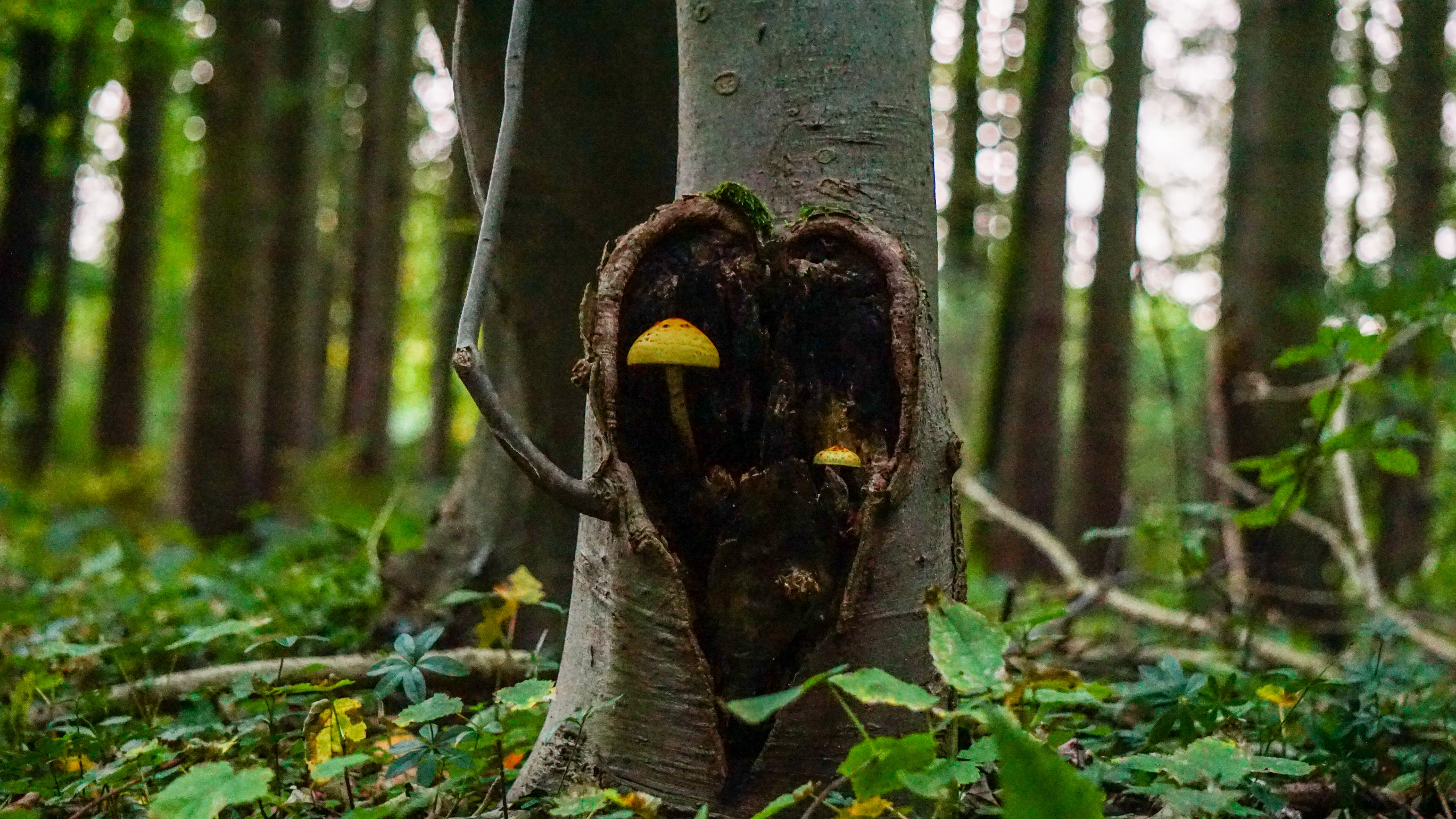 Free stock photo of nature, art, forest, yellow