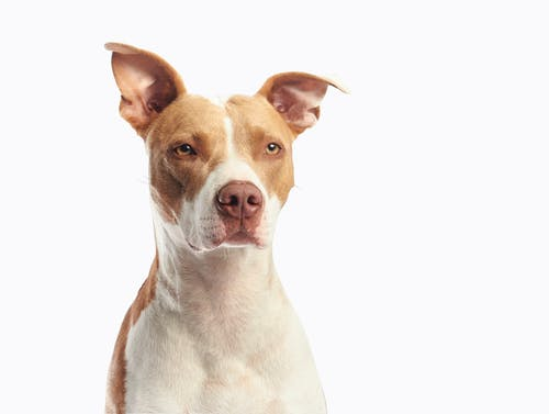 Free stock photo of adorable, animal, canine, dog