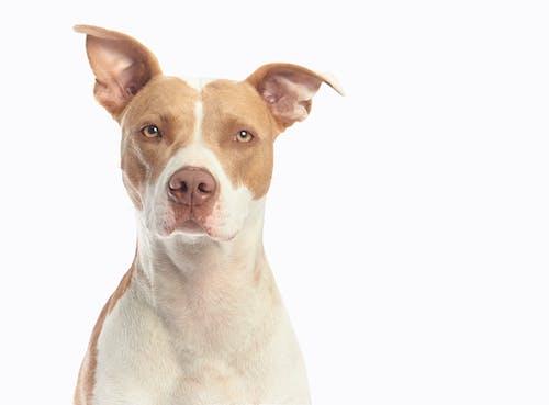 Free stock photo of adorable, canine, dog, domestic animal