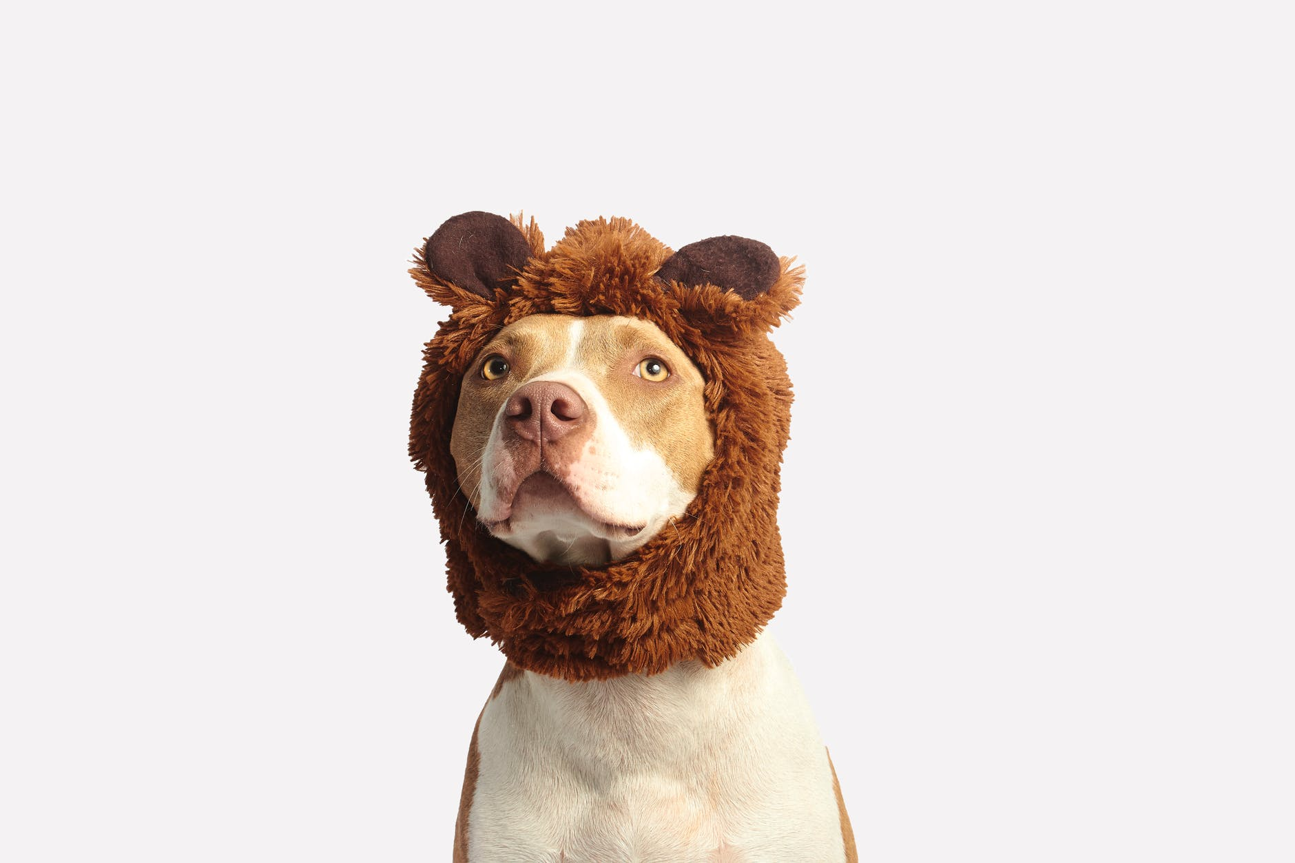 dog with head dress