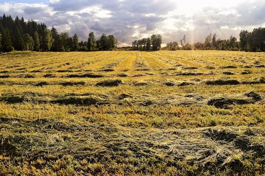 Free stock photo of sunny, field, blue, summer