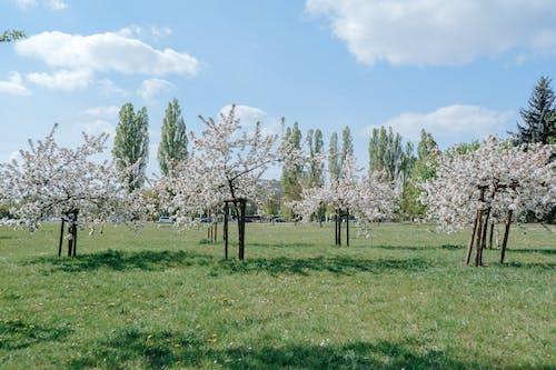 경치, 공원, 꽃의 무료 스톡 사진