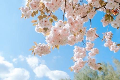 가지, 계절, 꽃의 무료 스톡 사진
