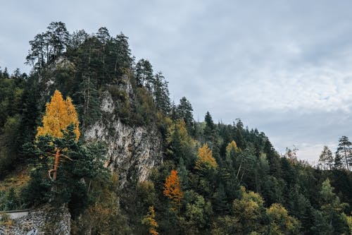 가을, 경치, 경치가 좋은의 무료 스톡 사진