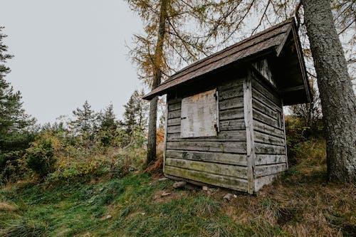 가을, 가족, 경치의 무료 스톡 사진