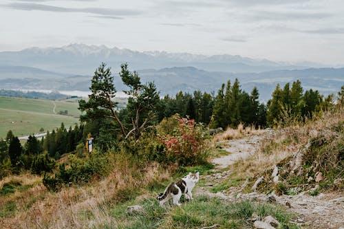 가을, 개, 건초지의 무료 스톡 사진