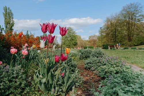 경치, 꽃, 꽃이 피는의 무료 스톡 사진
