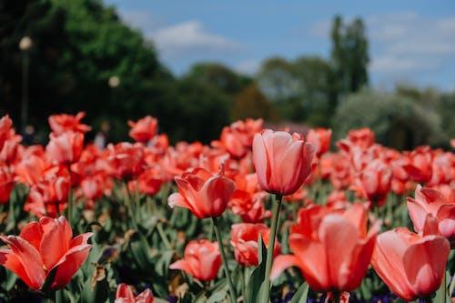 꽃, 농촌의, 들판의 무료 스톡 사진