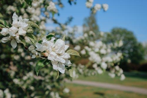 가지, 꽃, 꽃봉오리의 무료 스톡 사진