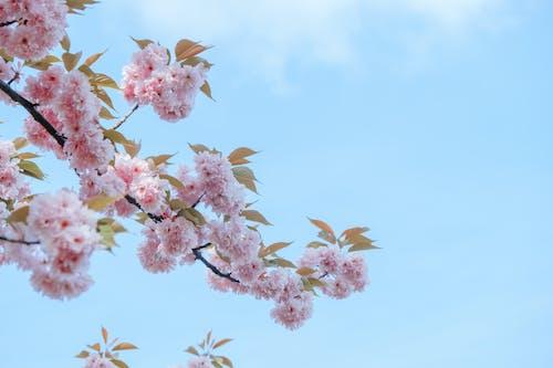 가지, 꽃, 나무의 무료 스톡 사진