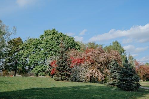 가을, 경치, 공원의 무료 스톡 사진