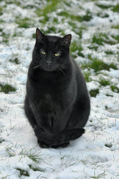 Black Cat on Snow Covered Ground