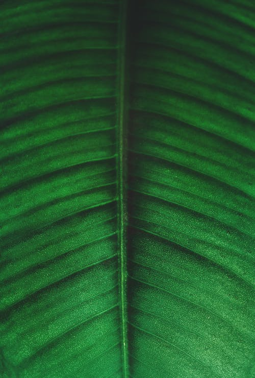 Green and Black Leaf Photo
