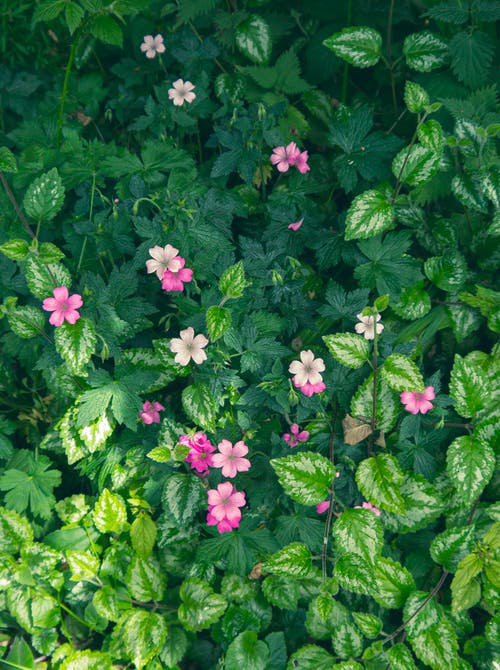 Pink Flowers With Green Leaves