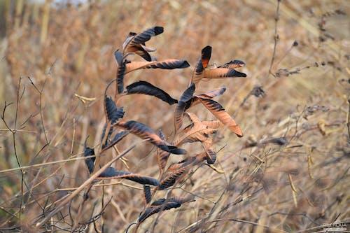 Ilmainen kuvapankkikuva tunnisteilla kasvi, luonto, savanni, väri