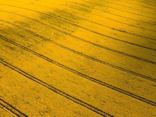 Immagine gratuita di agricoltura, astratto, campo