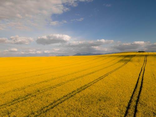 Immagine gratuita di agricoltura, azienda agricola, campagna