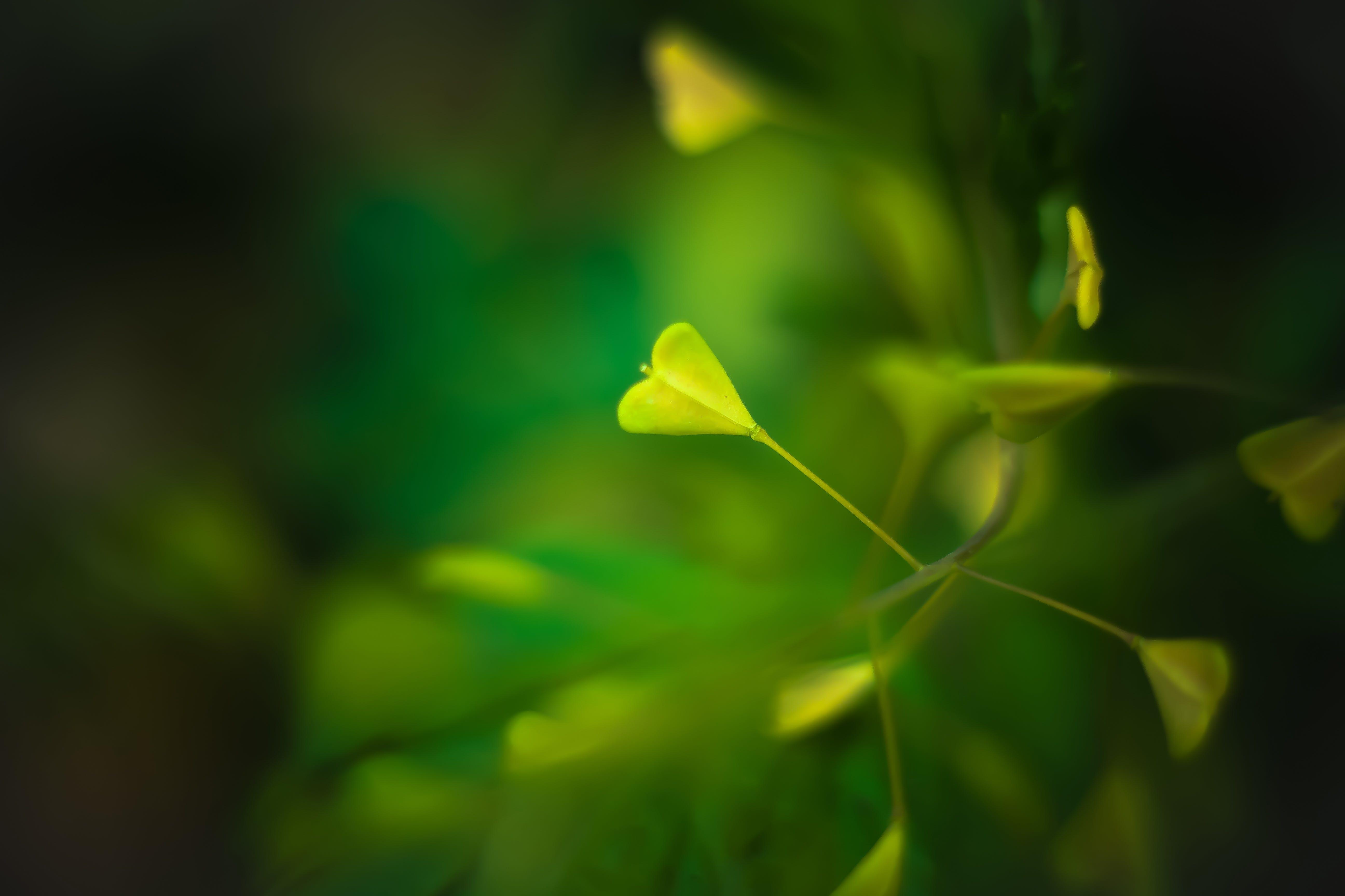 heart, nature, plant