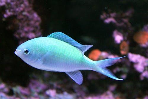 Δωρεάν στοκ φωτογραφιών με ενυδρείο, ψάρι